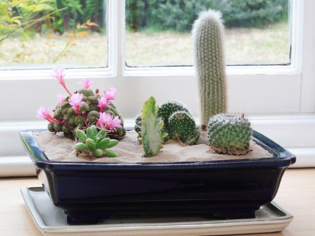 Superieur How To Create A Cactus Garden?