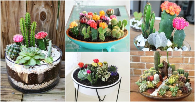 Small Cactus Garden Is A Genius Way Of Organizing Your Cacti   Virily