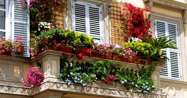 Tips for a beautiful balcony garden virily - Tips for a lovely garden ...