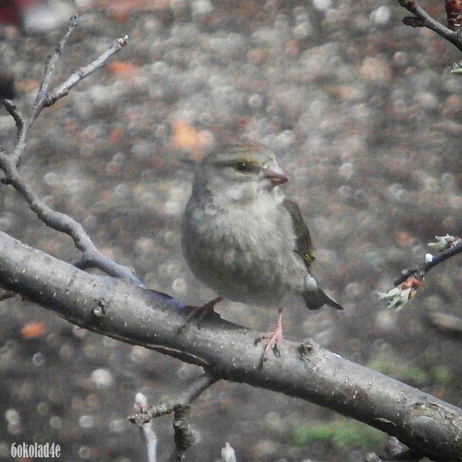 Just A Cute Bird