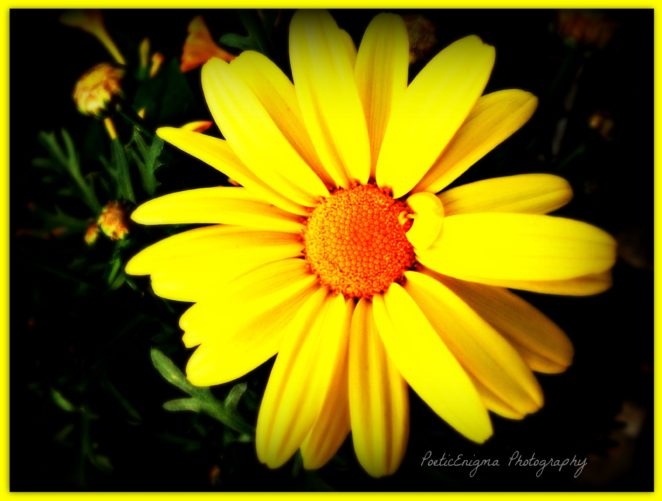 Pretty yellow flower virily this is a simple yellow flower but i think that is what makes it so pretty not sure what its name is but i am sure once i hear it i will mightylinksfo